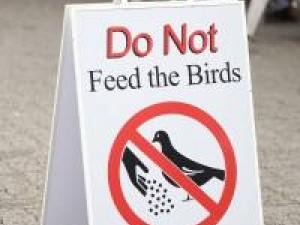 do_not_feed_birds_sign